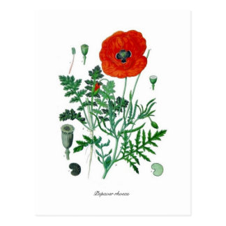 Carte Postale Rhoeas de pavot