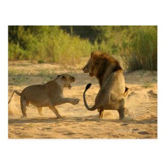 Carte Postale Rivière de Timbavati, parc national de Kruger, le