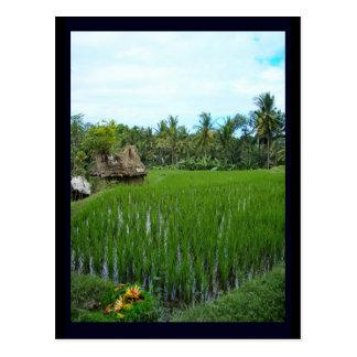 Carte Postale Rizière, Ubud Bali, Indonésie
