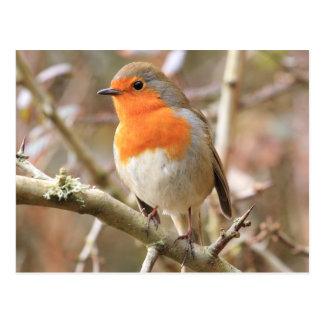 Carte Postale Robin gai