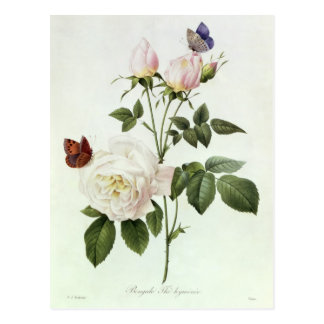 Carte Postale Rosa : Bengale le Hymenes