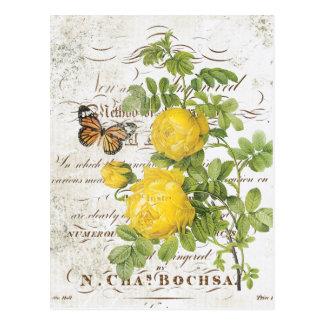 Carte postale rose botanique française vintage