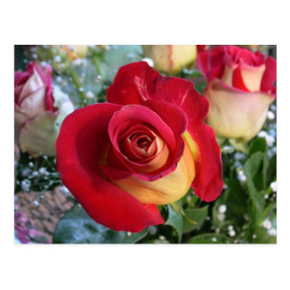 Carte postale rose de bouquet