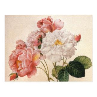 Carte postale rose de cru