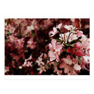 Carte postale rose de fleur