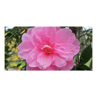 Carte postale rose de fleur de ressort photocarte