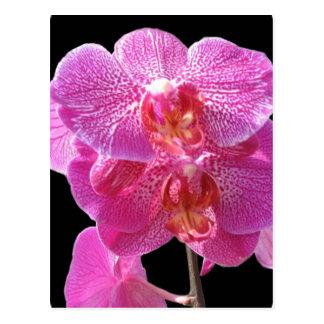 Carte postale rose de floraison d'orchidées