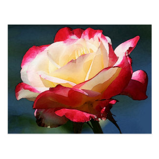 """Carte Postale Rose de thé hybride de """"double plaisir"""""""