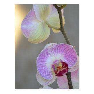 Carte postale rose d'expression d'orchidée