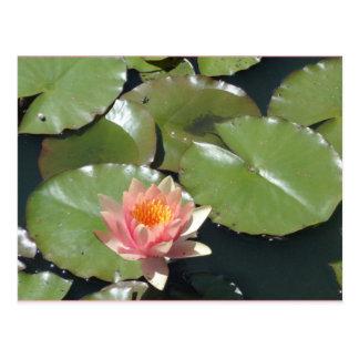 Carte postale rose et jaune de fleur