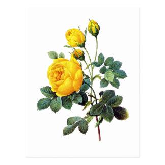 Carte Postale Rose jaune par Pierre Joseph Redoute