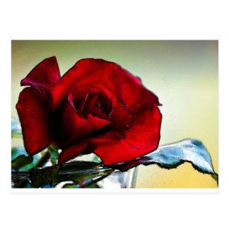 Carte Postale rose rouge Chypre