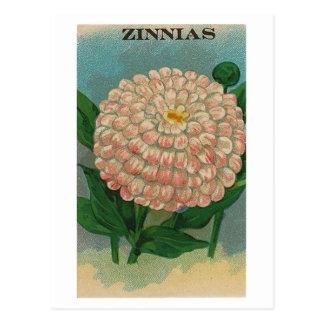 carte postale rose vintage de paquet de graine de