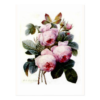 Carte Postale Roses