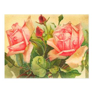 Carte Postale Roses en fleur