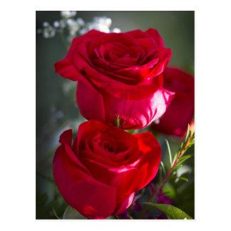 Carte Postale Roses rouges romantiques vibrants