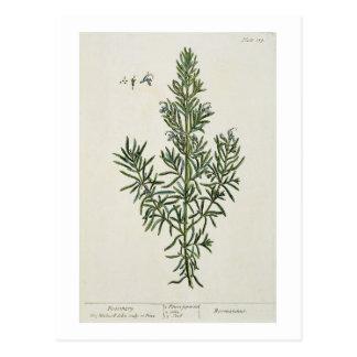 "Carte Postale Rosmarinus Officinalis, ""d'un de fines herbes"