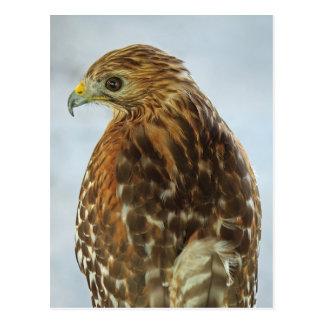 carte postale Rouge-épaulée de faucon (lineatus de
