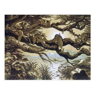 Carte Postale Royaume des fées : Endormi dans le clair de lune