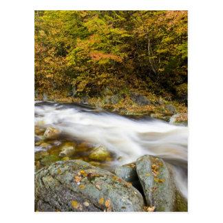 Carte Postale Ruisseau d'hurlement dans la chute en vert du