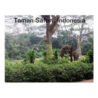 Carte Postale Safari de Taman