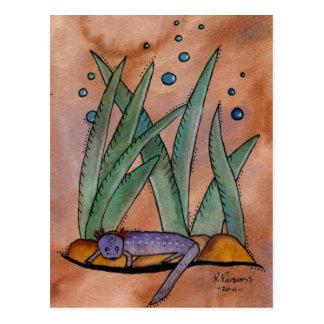 Carte Postale Salamandre de Barton Springs