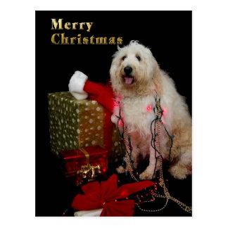Carte postale - salutation de Noël - chienchien