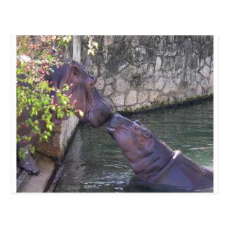 Carte Postale Salutation d'hippopotame de mère et de bébé