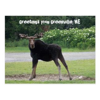 Carte Postale Salutations de Greenville 1
