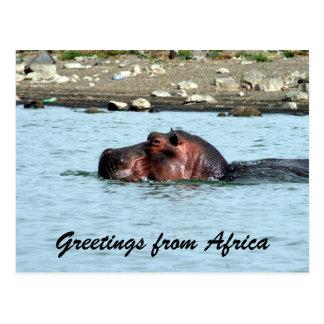 Carte Postale salutations d'hippopotame