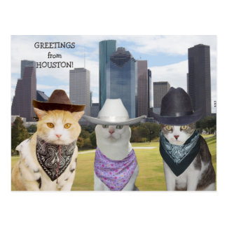 Carte Postale Salutations drôles de chats/minous de Houston