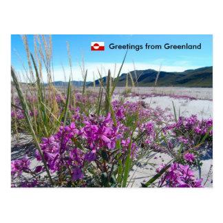 Carte Postale Salutations du Groenland 5