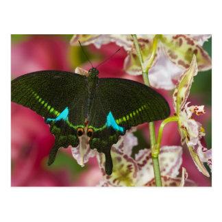 Carte Postale Sammamish, papillon tropical 14 de Washington