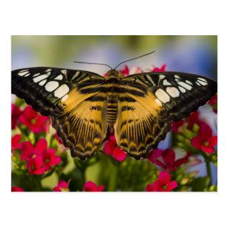 Carte Postale Sammamish, papillon tropical 26 de Washington