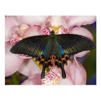 Carte Postale Sammamish, papillon tropical 41 de Washington