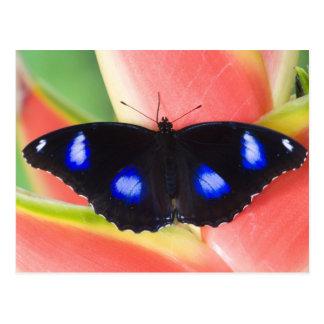 Carte Postale Sammamish, Washington. Papillons tropicaux 58