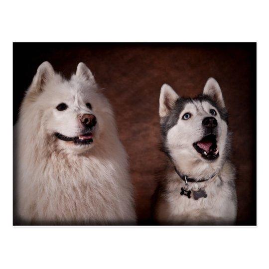 Carte Postale Samoyed and Husky