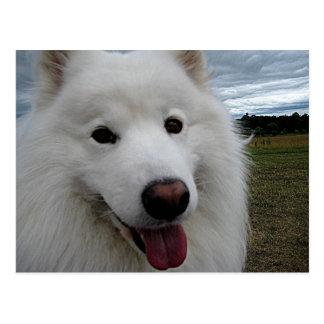 Carte Postale Samoyed de parc de chien
