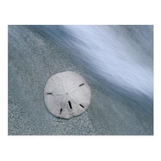 Carte Postale Sanddollar sur l'île de la plage   Sanibel, la