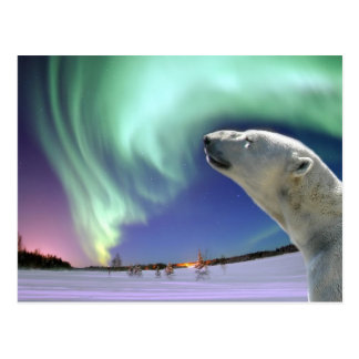Carte Postale Sauvez les ours blancs mis en danger pour Noël