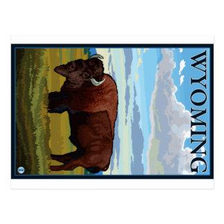 Carte Postale Scène de bison - Wyoming