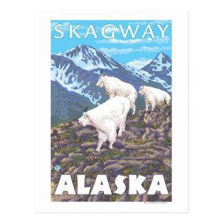 Carte Postale Scène de chèvres de montagne - Skagway, Alaska
