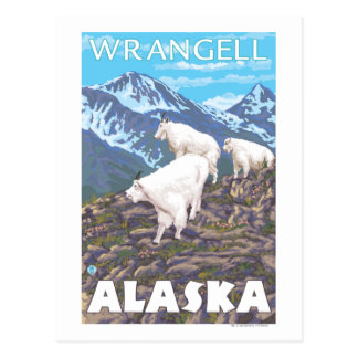 Carte Postale Scène de chèvres de montagne - Wrangell, Alaska