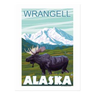 Carte Postale Scène d'orignaux - Wrangell, Alaska