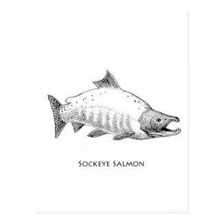 Carte Postale Schéma saumon de saumon rouge