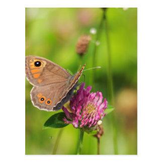 Carte Postale Schmetterling