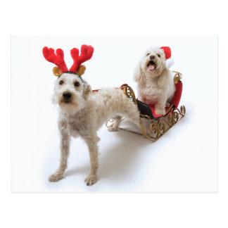 Carte Postale schnoodle blanc se tenant avec Noël rouge