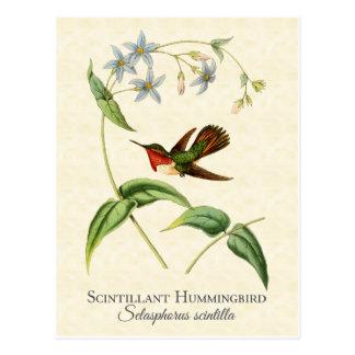 Carte postale Scintillant d'art de colibri