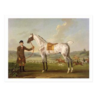 Carte Postale Scipio, Hunter de Spotted, c.1750 (oi de colonel