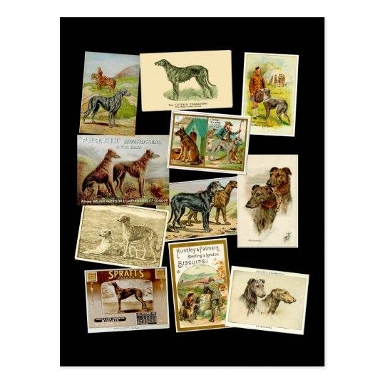 Carte Postale Scottish deerhound : vintage